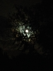 full moon in trees