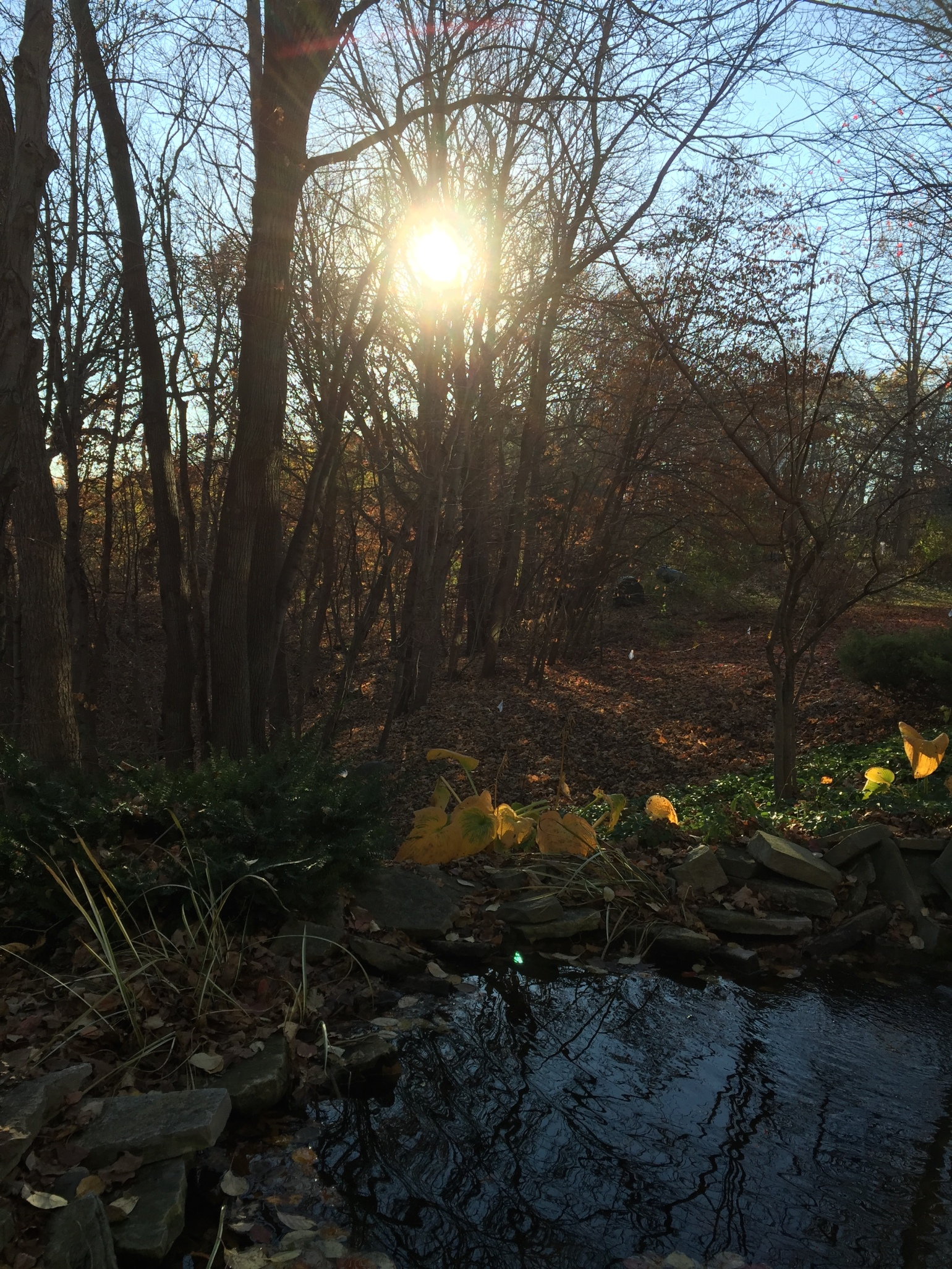 pond-in-backyard
